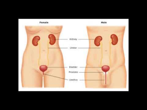 how to get rid of a bladder infection |home remedies for bladder infection