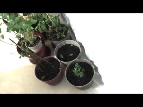 Homesteading - The Indoor mini Garden #Summer #Gardening