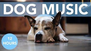 RELAXING ASMR DOG MUSIC! Easy Sleep Music to Help Your Anxious Dog!