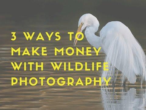 3 Ways to Make Money with Wildlife Photography Ep: 1