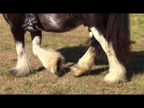 How To Wash Horses' Hoofs And Their Feathered Legs The Easy Way