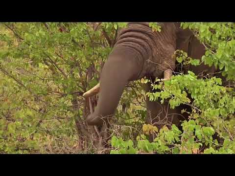 Using Bees to Protect Elephants: Daily Planet