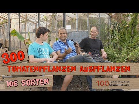 300 Tomatenpflanzen und 26 Chilisorten pflanzen - 100 Tomatensorten GWH