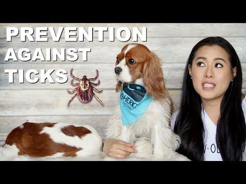 TICK PREVENTION for Dogs | Lyme Disease American Dog Tick | Nexgard Advantix