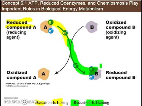 Ch  6.1c - Redox Reactions and Reduced Coenzymes (NADH) in metabolism