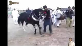 Hisan l3ajib