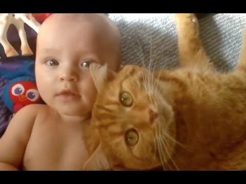 Babies And Cats