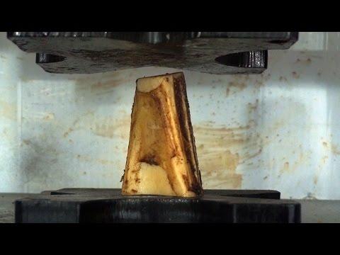 Real Bone Crushed By Hydraulic Press