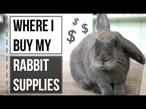 Where I Buy My Rabbit Supplies
