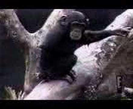 Mono se mete el dedo en el culo y se cae desmayado