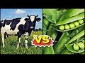 Download Video Download The TRUTH About Animal v. Plant Protein (JUST PUBLISHED!) | Cory McCarthy 3GP MP4 FLV