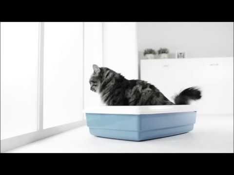 Prevent the Cat from Spraying at Home