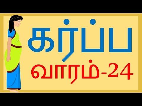 Pregnancy   Tamil   Week by Week   Week 24    வாரம் 24
