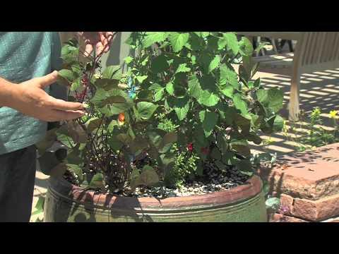 DigInfo: Compost vs. Fertilizer
