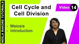 Cell Cycle Cell Division Meiosis Introduction