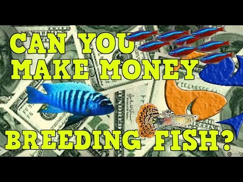 Can You Make Money Breeding Fish?