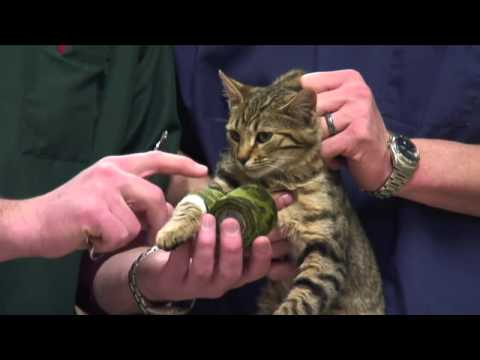 How to Care for Injured Cats