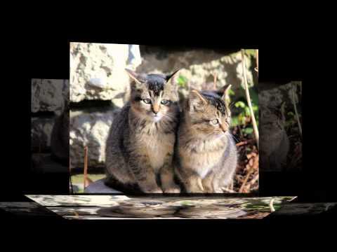 Feral cats_2014