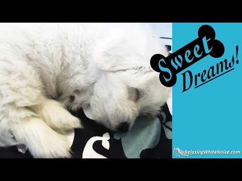 Dog Barking? Soothe Your Pet Now with Calming White Noise | Dog Sleep Sounds 10 Hours