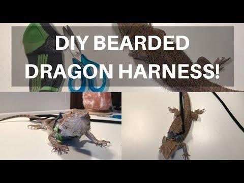 DIY Bearded Dragon/Small Pet Harness | BEARDED DRAGONS FIRST WALK!!