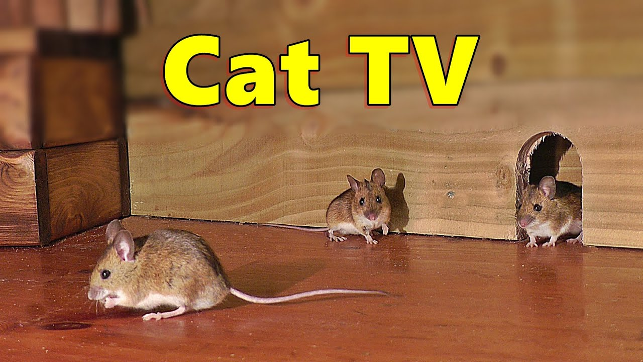 Cat TV ~ Mice in The Jerry Mouse Hole 🐭 8 HOURS 🐭