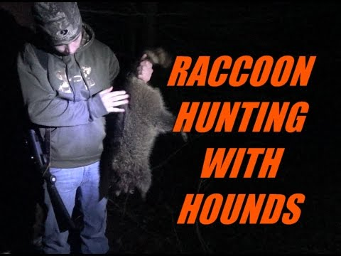 Raccoon Hunting with Hounds in Pennsylvania
