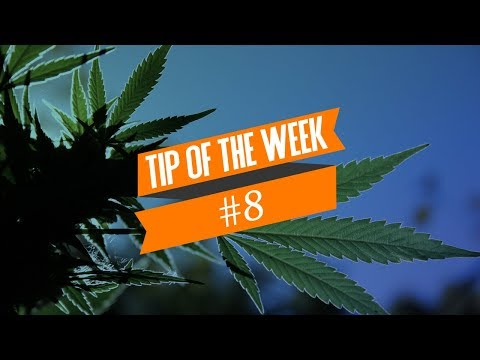 Cannabis Hermaphrodites (Hermies) - Tip Of The Week #8