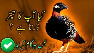 Kala Teetar Ki  APRIL or MAY  Ki Khurak in Hindi/Urdu