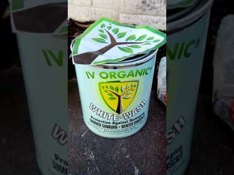 Iv organic white wash product and the fruit trees and vines Iam using it on in Phoenix, Arizona.