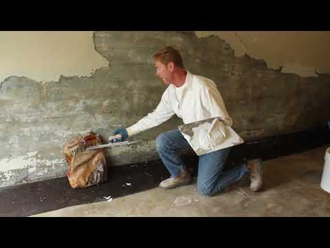 Mold in your plaster walls