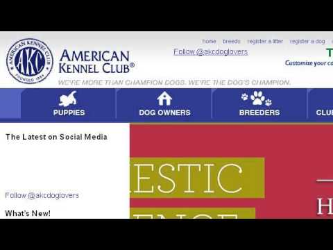 How Do I Register Puppies With An ACA Mom And AKC Dad?
