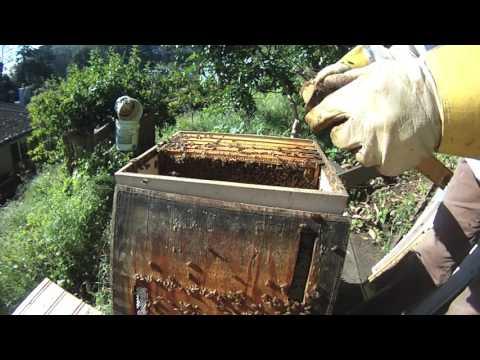 Backyard Beekeeping - Foulbrood Ended The 2017 Season