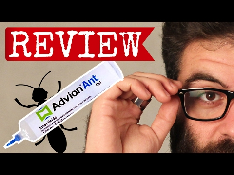 Advion Ant Gel Review: Will this bait help you get rid of ants?