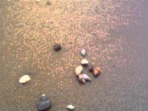 Australia NT Darwin moving seashells