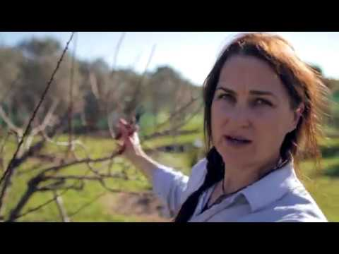Pruning a Mature Fruit Tree