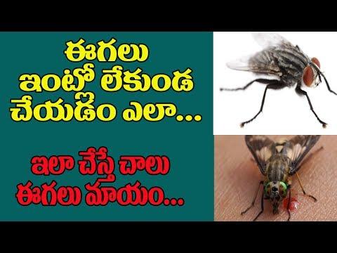 ఈగలు ఇంట్లో లేకుండా చేయడం ఎలా  | How to Get Rid of Fly Insects at House | Home Remedies |TopTeluguTv