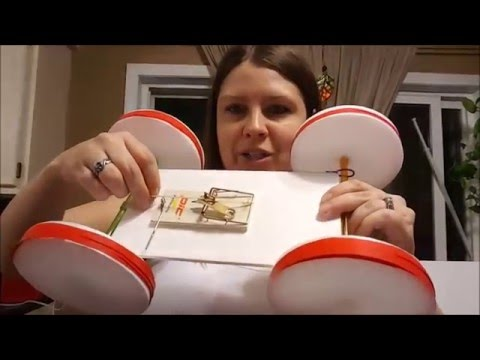 Dollar Tree DIY Mousetrap Car for $6- EASY!