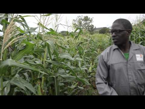 Improving soil health in Mozambique