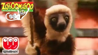 Zoboomafoo | Episode: Rope Swing | Animals For Kids