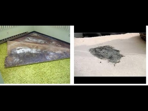how to kill mold in carpet review