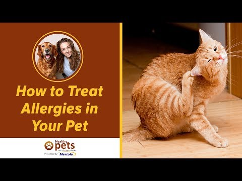 Dr. Becker: How to Treat Allergies in Your Pet