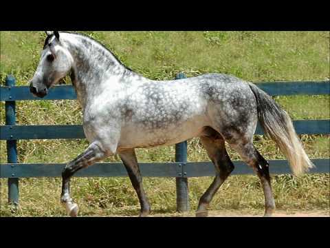 Horse Picture Quiz App