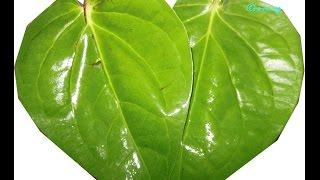 पान से तीव्र वसीकरण  -Vastu Tips For Vasikaran Vidhi