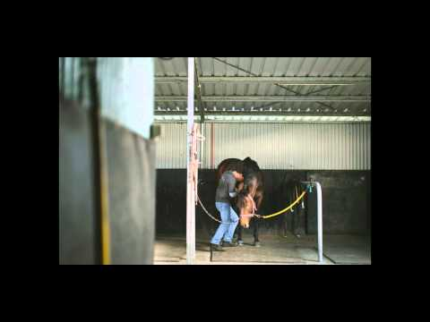 CHRISTIAN LANGEDER A SNAPSHOT INTO THE LIFE OF AN EQUINE SOFT TISSUE SPECIALIST