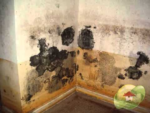 Remove Mold From Your House