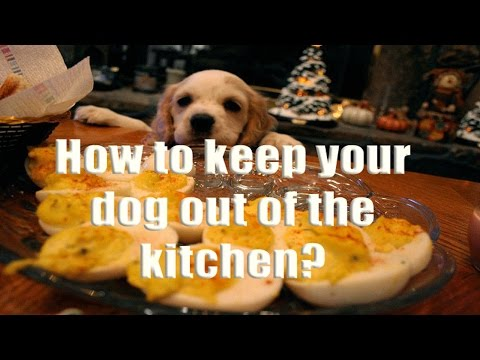 ►How to keep your dog out of the kitchen - Doggy Dans Dog Training Videos