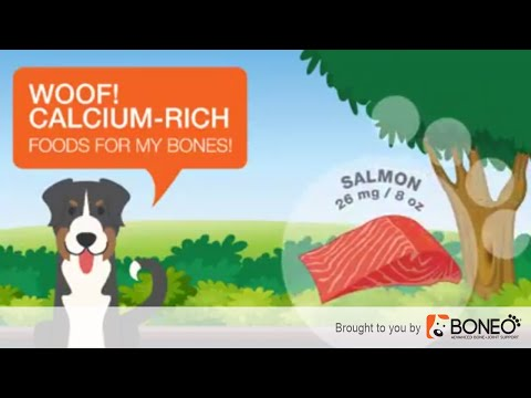5 Sources of Calcium for Dogs