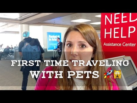 Cats on a Plane! - First Time Traveling with Cat