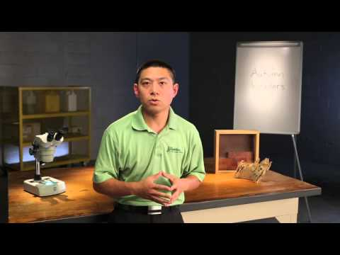 Guardian Pest Solutions | Pest Defense with Dr. Hao Yu | Cluster Flies