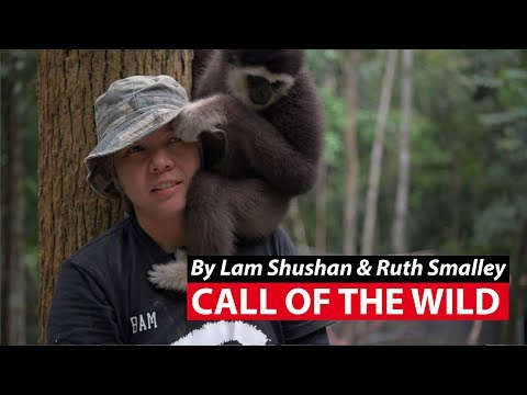Call of the Wild: Saving Malaysia's Gibbons | CNA Insider